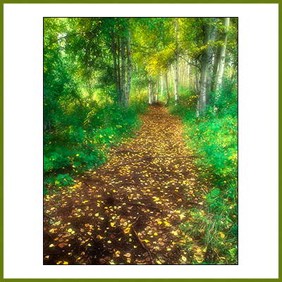 Prints Image - Autumn Path