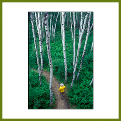 Path in Aspens, Prince Albert National Park, Sask.