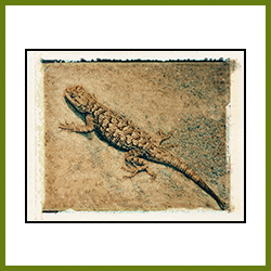 Lizard (Image Transfer)