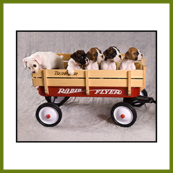 Pets Gallery Image - Boxers in Wagon