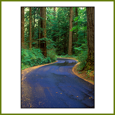 Stock Image - Road in Forest