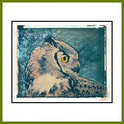 Great Horned Owl (image Transfer)
